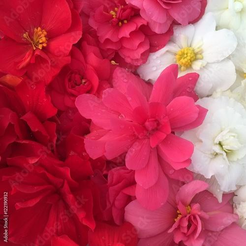 Photo sur Toile Azalea Цветы