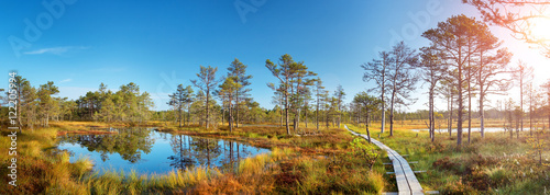 Obraz na plátně  Viru bogs at Lahemaa national park in autumn