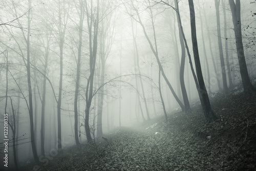 Fotobehang Chocoladebruin Foggy and scary forest trees with mysterious forest path.