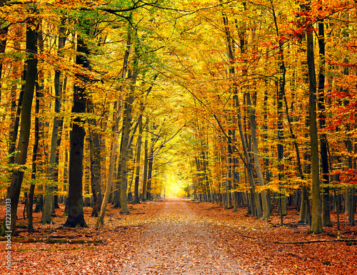 Photo Stands Road in forest Pathway in the bright autumn park