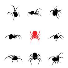Black Widow Spider In Silhouet...