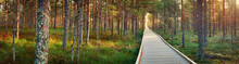 Viru Bogs At Lahemaa National Park In Autumn. Wooden Path At Beautiful Wild Place In Estonia