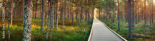 Stickers pour porte Route dans la forêt Viru bogs at Lahemaa national park in autumn. Wooden path at beautiful wild place in Estonia