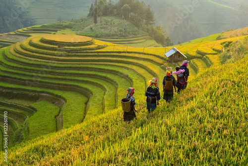 Foto op Aluminium Bali Rice fields on terraced of Mu Cang Chai, YenBai, Vietnam