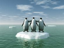 Pingüinos Sobre Un Témpano De Hielo