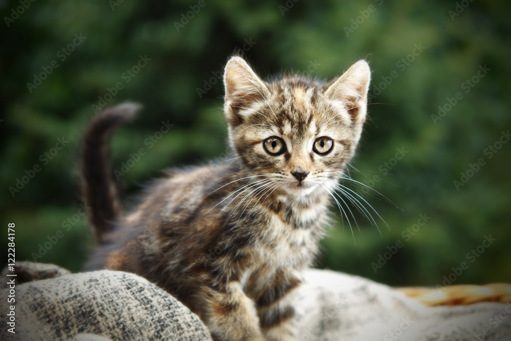 Fototapety, obrazy: Little cat outdoors