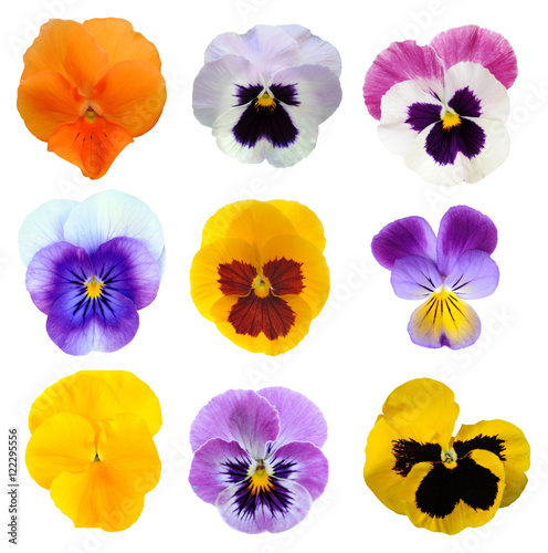 Papiers peints Pansies orange pansy flower