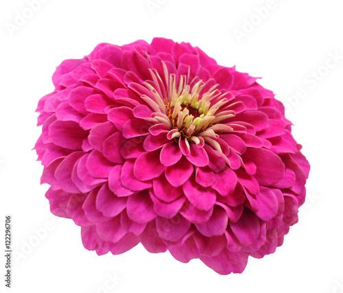 Tuinposter Gerbera pink zinnia