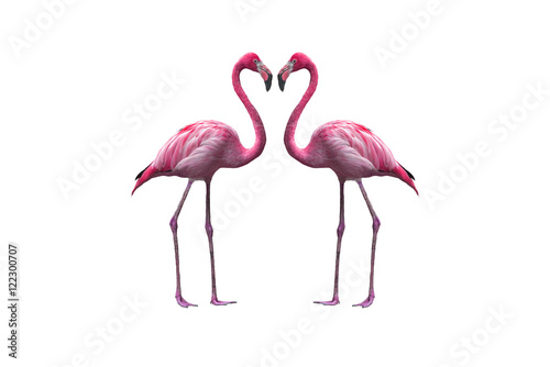 Garden Poster Flamingo Bird flamingo walking on a white background , flamingo isolated on white background ,Beautiful bird flamingo