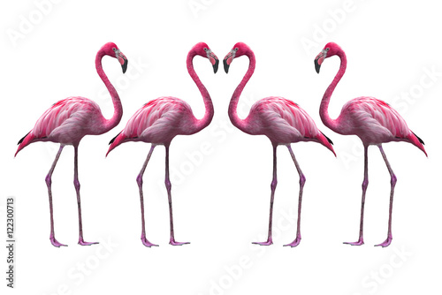 Foto op Aluminium Flamingo Bird flamingo walking on a white background , flamingo isolated on white background ,Beautiful bird flamingo