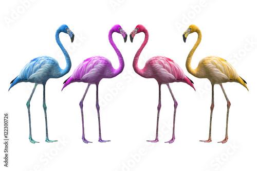 Foto op Aluminium Flamingo Bird flamingo walking on a white background , flamingo isolated on white background ,Beautiful bird flamingo