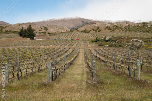 Photo  Winter view on a vineyard with view on mountain range in central Otago, New Zeal