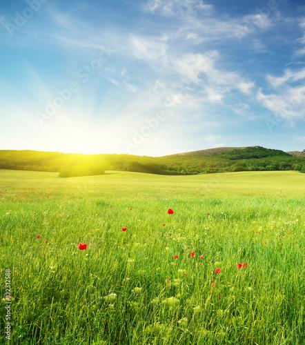 Green spring meadow Fototapete
