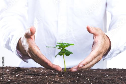 Fotografie, Obraz  植物を育てる人間の手
