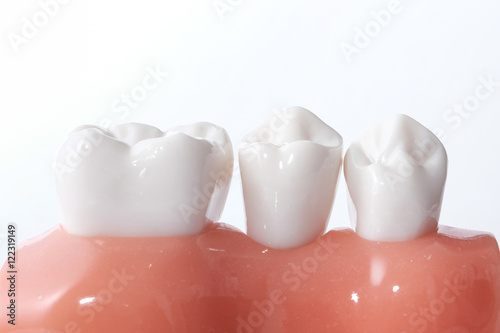 Obraz na plátně Generic dental teeth model