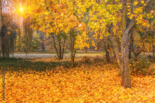 Fototapety, obrazy: Beautiful autumn scene. Colorful foliage in the park.