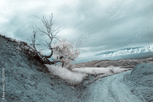Infrared landscape and details Fototapet