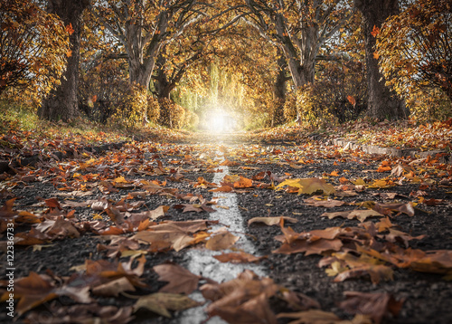 Photo Stands Cappuccino Autumn landscape and beautiful trees.