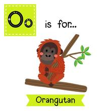 O Letter Tracing. Orangutan Si...