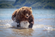 Hunt Run, Catching That Salmon
