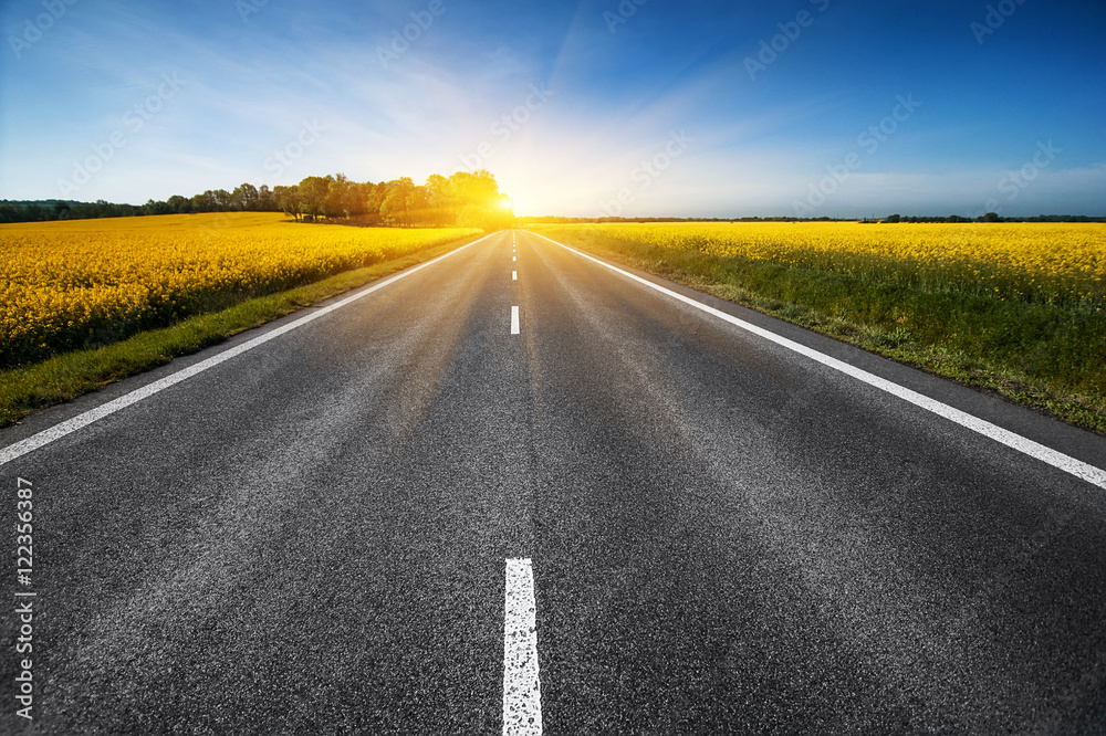 Fototapeta empty asphalt road and floral field of yellow flowers. summer (spring, autumn) background
