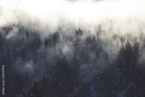 The morning fog entering a forest on a mountainside