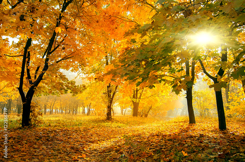 Spoed Foto op Canvas Weg in bos colorful trees in sunny autumn forest. natural background