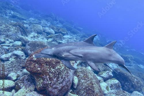 Plakat Rodzic i dziecko delfina