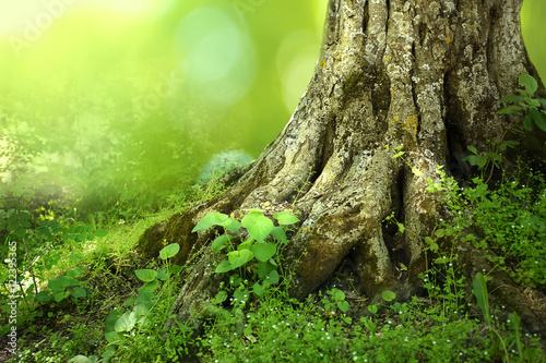 Photo  Big tree roots in a green forest