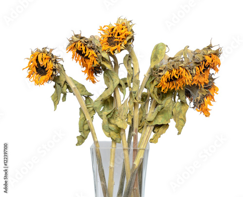 Fotografía  Dry sunflower in a vase