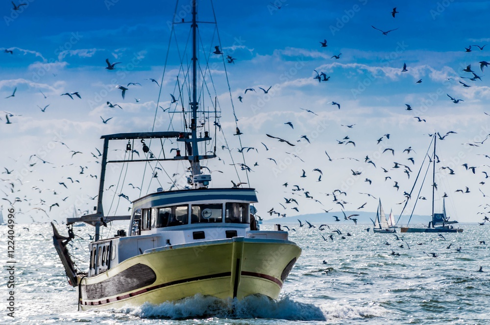 Fototapeta Retour de pêche d'un chalutier.