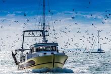 Retour De Pêche D'un Chalutie