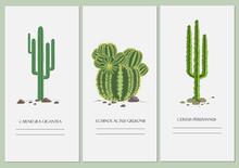 Business Cards Set With A Cactus Design.