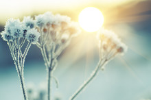 Frozen Meadow Plant, Natural V...
