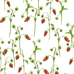 Fototapeta seamless pattern with watercolor drawing plants of strawberry