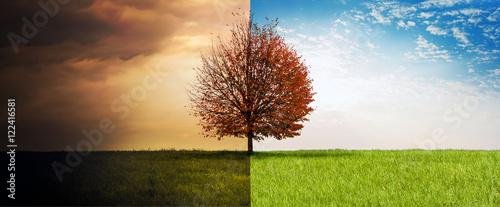 Fotografie, Obraz  Sommer-Herbst