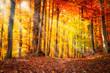 Wald im Herbst mit Sonnenlicht