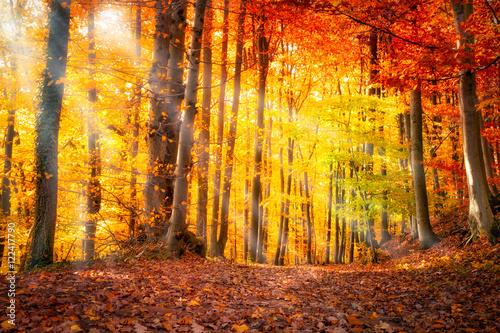 Fotografia  Wald im Herbst mit Sonnenlicht