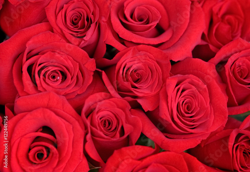 Colorful Rose background   #122449756