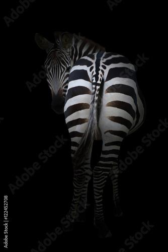 Poster Zebra zebra in the dark