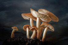 Toadstools With Water Drops