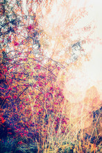 Autumn Nature Landscape With Fall Trees And Rose Hip Bush In Garden Or Park, Outdoor