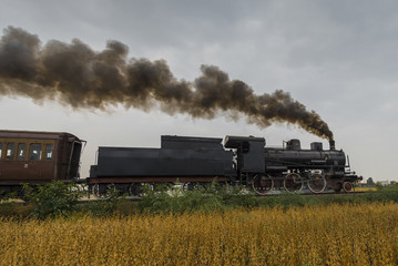 Fototapeta na wymiar Steam locomotive runs between soybean fields