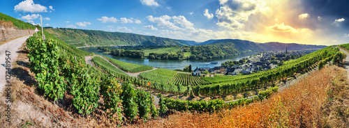 Spoed Foto op Canvas Natuur Panoramic landscape with autumn vineyards