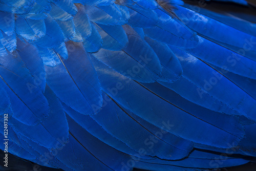 Photo sur Toile Les Textures Hyacinth Macaw feathers