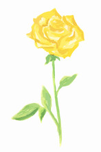 Isolated Watercolor Yellow Rose On White Background. Beautiful And Gentle Flower. Romantic Decoration.