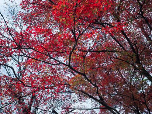 Poster Bordeaux 紅葉の秋