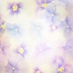 Fototapeta Violet Flowers Background