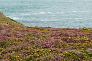 Fototapeta Oceano e Brughiera
