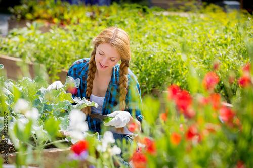 Papiers peints Pansies Woman checking cabbages in kitchen garden